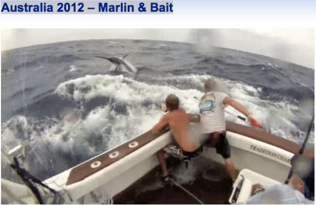 Australian Marlin