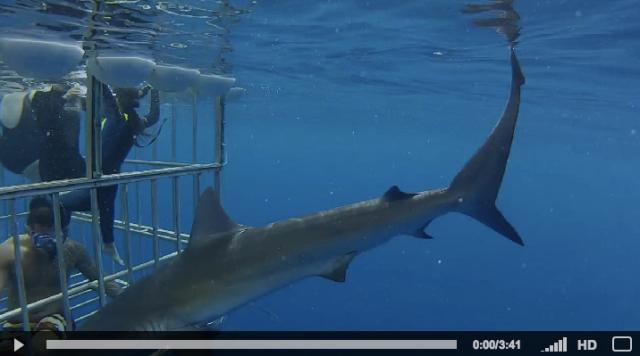 GoPro Sharks 2