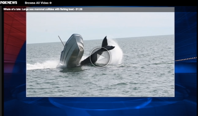 Whale Fishing Boat Collision