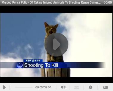 Animal Target Practice