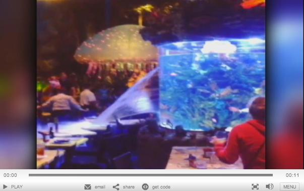 Disney restaurant fish tank springs leak soaks diners for Disney fish tank