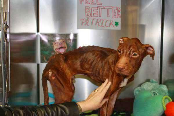Feel Better Patrick