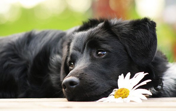 do-dogs-love-their-owners