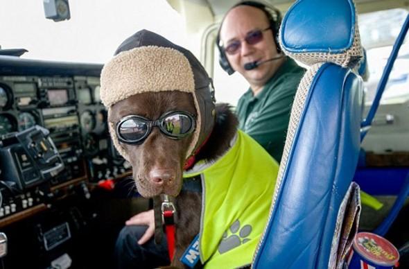 Callie The Pilot