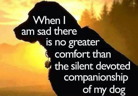 The Silent Devotion Of Dogs
